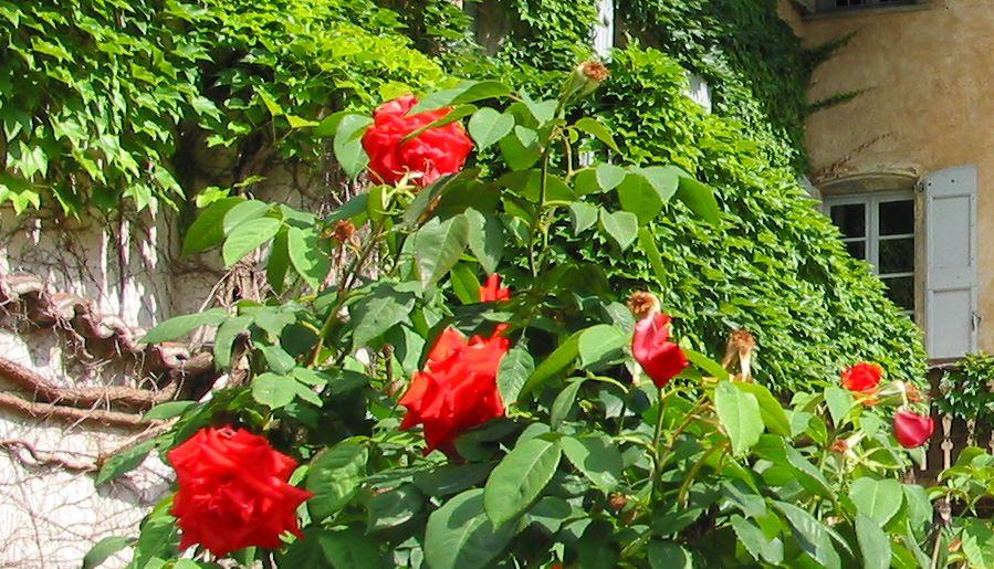 Rose Berlioz